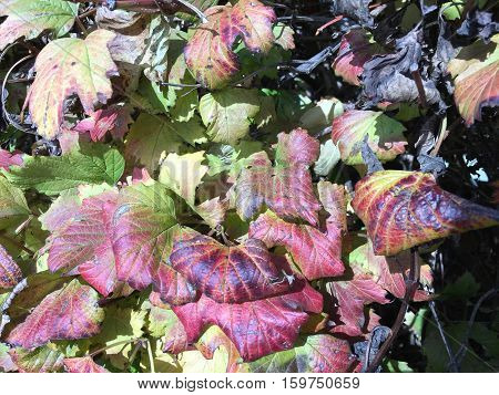 Colorful Fall Leaves Changing Color
