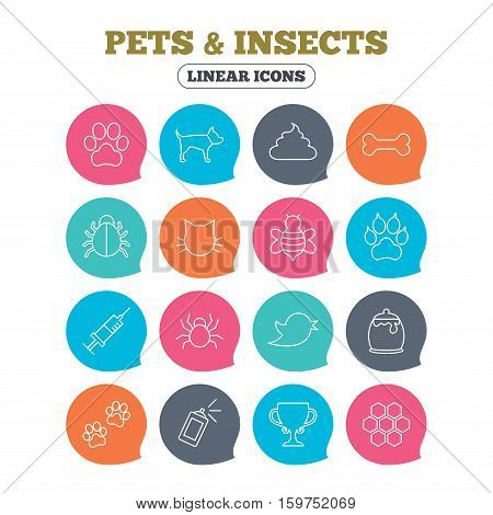 Pets and Insects icons. Dog paw. Cat paw with clutches. Bone, feces excrement and vaccination. Honey, bee and honey comb. Flat speech bubbles with linear icons. Vector