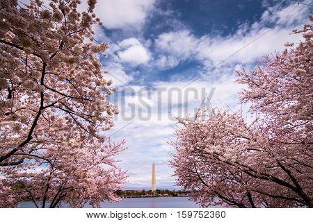 Washington Monument as seen from the tidal basin. Washington DC USA