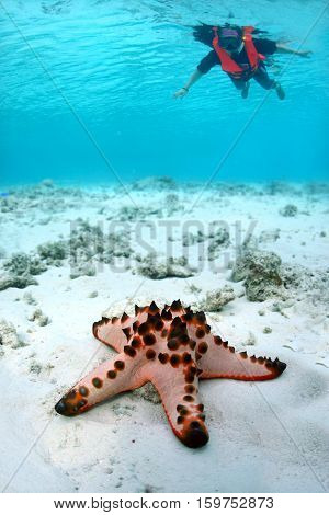 Seastar of starfish on white sand in clear tropical waters in front of out of focus old Asian woman diver indo-pacific ocean