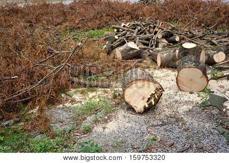 The destroyed forest loggers environmental disaster. deforestation. copy space.