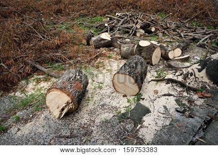 The destroyed forest loggers environmental disaster. deforestation. (dark tone)