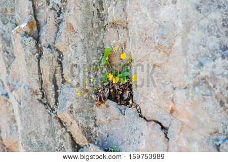 A flower sprouted up through the rock overcoming self concept
