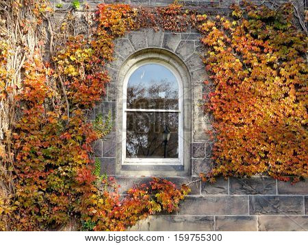 Toronto Canada - November 18 2016: Window of Gerstein Science Information Centre at the University of Toronto.
