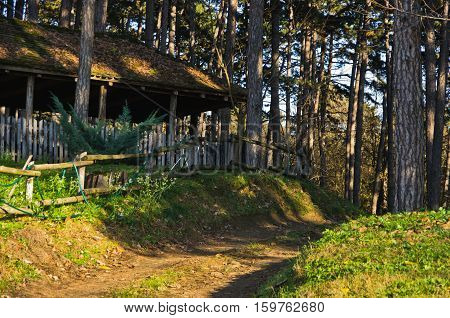 Country road through woodland at sunny autumn day, Deliblatska pescara, Serbia