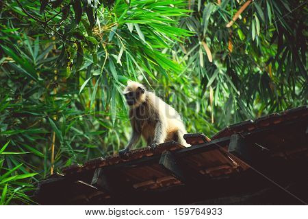 Monkey at the roof near green plants
