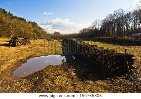 Piles of firewood on a meadow at sunny autumn day at Deliblatska pescara, Serbia