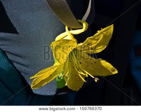 Yellow flower on a backpack on a sunny autumn day at Deliblatska pescara, Serbia