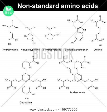 Non-standard amino acids chemical structures 2d scientific vector illustration isolated on white background eps 8