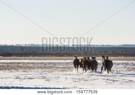 Horses running through a snowy field toward the woods