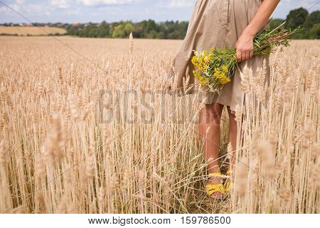 Closeup of woman hands holding wild yellow flowers. Girl walking on the wheat field and enjoying sun. Summer background. Girl walking on the meadow. Lifestyle and happiness freedom concept