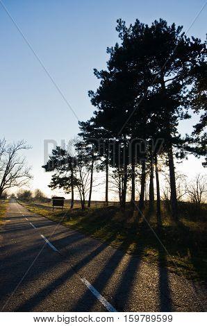 Sunrays and long shades of trees at autumn sunset, Deliblatska pescara, Serbia