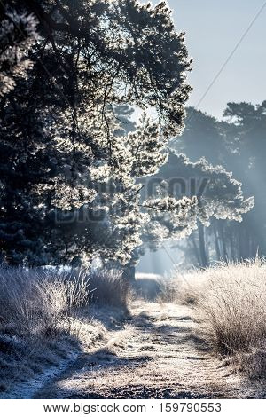 Frozen Path Lit By The Morning Sun