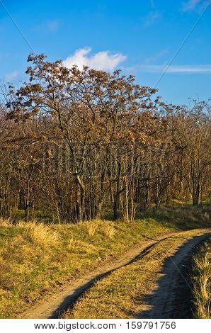 Country road at sunny autumn day, Deliblatska pescara, Serbia