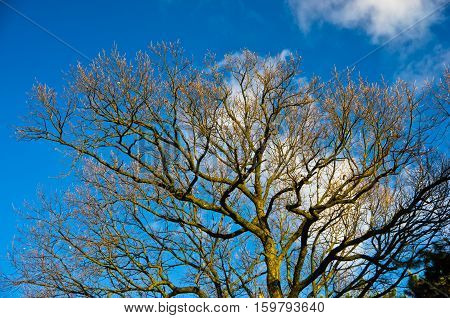 Tree branches without leaves against blue sky at sunny autumn day
