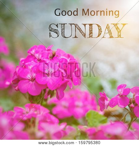 Good morning Sunday over blur flower background with sun light