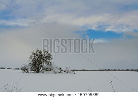 Rural landscape winter: Alta Murgia National Park. Apulian Christmas: trullo with tree in a snowy field.Italy,Apulia.