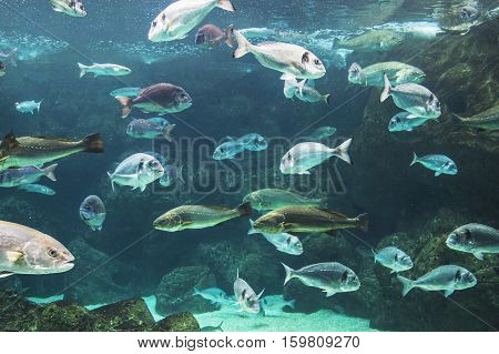 Multiple Fish swimming in a fish tank