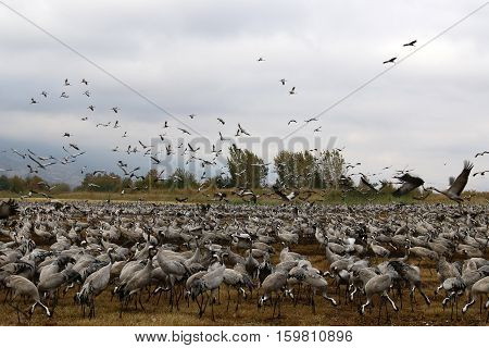 migratory birds in a national bird sanctuary Hula is located in northern Israel