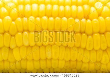 Closeup of yellow corn cob Macro shot