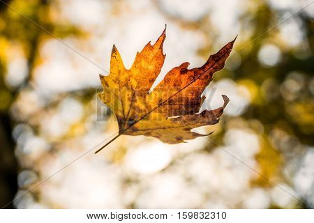 Leaf Falling from Tree captured on camera...