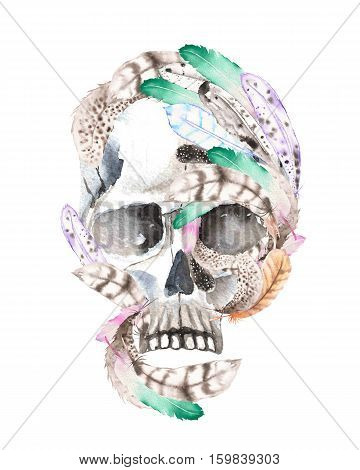 Skull with watercolor feathers illustration, hand drawn isolated on a white background