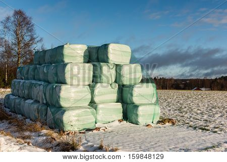 Silage bales on a field on a winter day