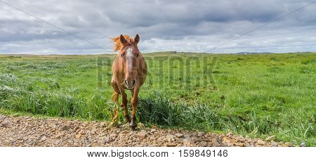 Horse in a pasture meadow comes walking up to the camera - comes walking right out of a grass field - as though to greet a friend - at roadside.