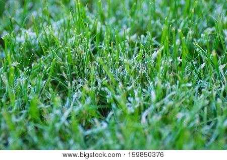 Macro shot of frost on lawn during winter