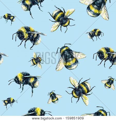 Bumblebee on a light blue background. Watercolor drawing. Insects art. Handwork. Seamless pattern