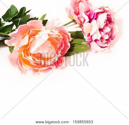 Pink peony isolated on white background. For your gifts and cards. Artificial flower.