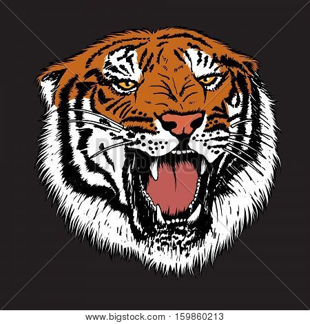 Angry tiger is growling.Isolated on black background