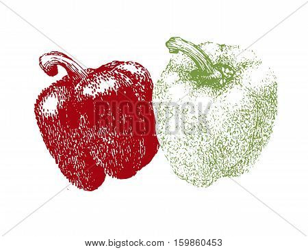 Hand drawn sketch of pepper. Bell sweet pepper .Vintage market fresh vegetables isolated on white background.