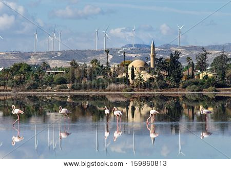 Hala Sultan Tekke or Mosque of Umm Haram is a Muslim shrine on the west bank of Larnaca Salt Lake in Cyprus.