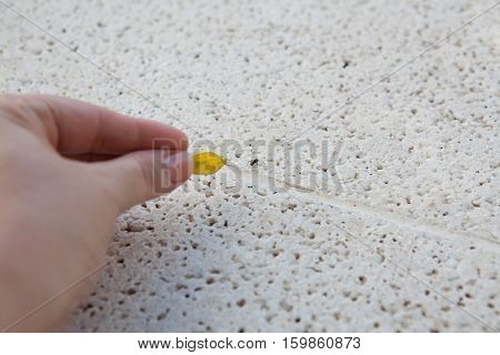 Hand holds yellow leaf while playing with black ant