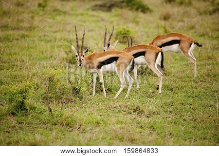 wildlife in Ngorongoro Conservation Area, a protected area and a World Heritage Site located 180 km west of Arusha in the Crater Highlands area of Tanzania