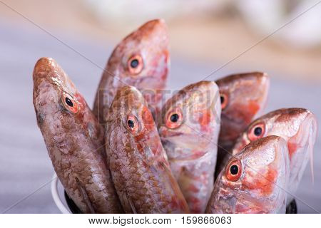 Fresh sea fish red mullet close up