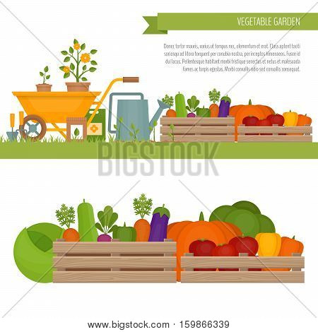 Vegetable Garden. Organic And Healthy Food.  Fresh Vegetables In A Box. Banner With Vegetable. Flat