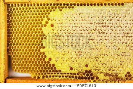 Honey bees Honeycomb close-up. honeycomb for background.