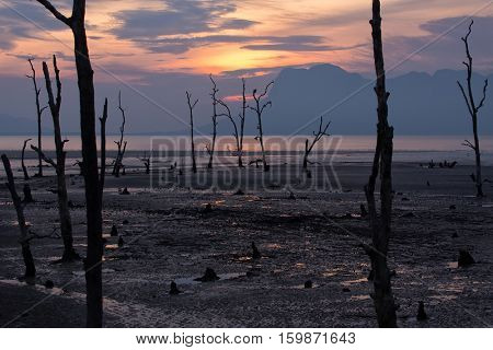 Sunset on a muddy mangrove dead tree area at low tide, Bako national park, Malaysia, Borneo