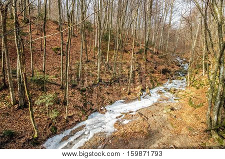 Frozen River In Winter Forest