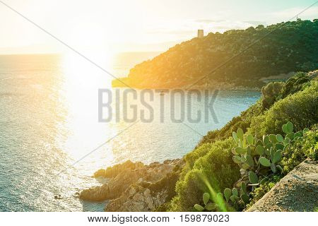 Mediterranean italian scrub next wild nature sea with sunshine - Road trip next sea - Vacation concept - Warm filter - Main focus on cactus wild plants
