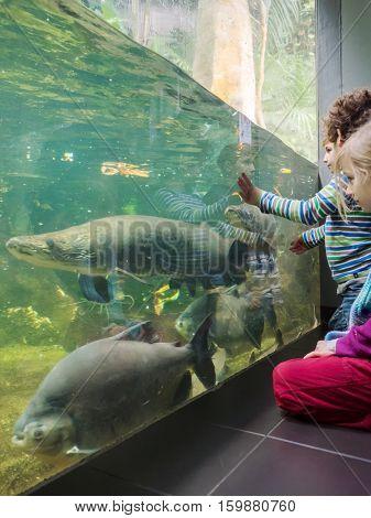 Kids In Aquarium Admire The Fishes