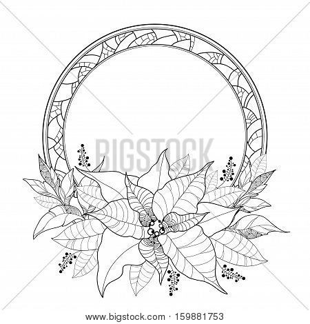 Vector Poinsettia or Christmas Star, leaves and ornate round frame isolated on white. Outline Poinsettia flower for winter design and coloring book. Traditional Christmas symbol in contour style.