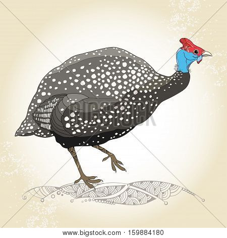 Vector illustration with Guinea fowl in contour style on the textured beige background. Outline wild bird in line art for fauna design.