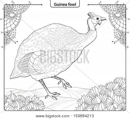 Vector illustration with Guinea fowl in contour style isolated on white background with ornate corner and leaves. Outline wild bird for coloring book in line art.