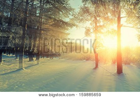 Winter landscape under bright evening sunlight with frosty trees. Winter forest in sunlight -winter landscape of nature covered with winter snow