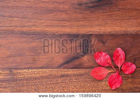 Dark grunge wooden background with five red leaves in the corner with copy space