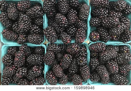 Several containers of picked fruit make a Blackberries background
