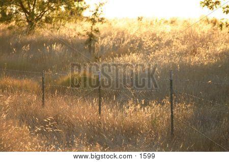 Sunkissed Field